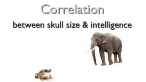 Correlation of brain size