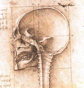 Skull drawing by Leonardo de Vinci