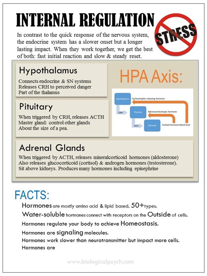 Infographic about Internal Regulation